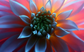 Picture flower, macro, light, middle