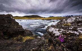 Picture flowers, river, shore
