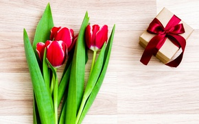 Wallpaper flowers, tulips, red, love, romantic, tulips, gift, red tulips
