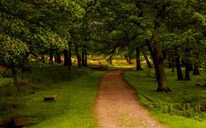 Wallpaper forest, grass, greens, UK, path, trees, Park, Peak District National Park