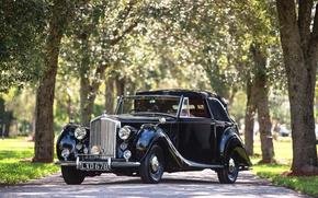 Picture summer, trees, Bentley, Retro, car, Drophead, Mark VI