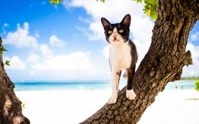 Picture the sky, cat, tree