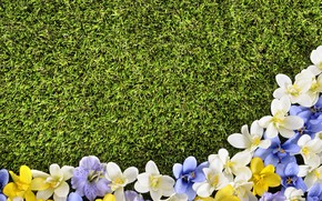 Picture flowers, lawn, spring, grass, weed, flowers, spring, lawn