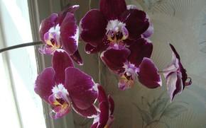 Picture beauty, Orchid, a little bit exotic