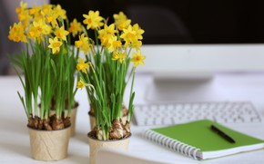 Picture flowers, handle, daffodils, yellow, Notepad