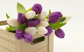 Wallpaper bouquet, tulips, wooden box, spring