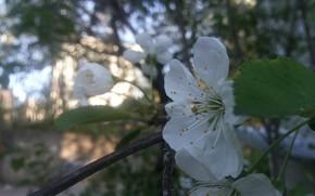 Picture leaves, tree, Flower, flowering