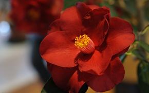 Picture macro, red, Camellia