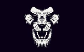 Picture White, lion, black