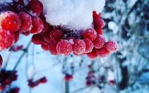 Picture Macro, Nature, Snow, Russia, Cold, Kalina, Gulkevichi