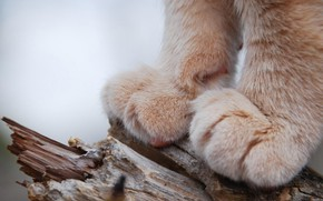 Picture photo, wood, cat, macro, animal, trunk, fur, closeup, depth of field, Paws, feline