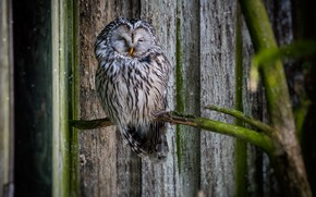 Picture bokeh, birds, branch, owl