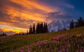 Wallpaper forest, light, flowers, mountains, mountain