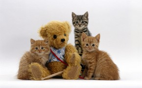 Picture toy, bear, kittens, trio
