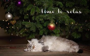 Wallpaper animal, holiday, kitty, tree, Christmas, toys, new year, ragdoll, cub, branches, ragdoll