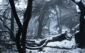 Picture winter, forest, snow, trees, England, England, Peak District, Staffordshire, The Peak District