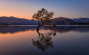 Picture mountains, birds, lake, the evening, New Zealand
