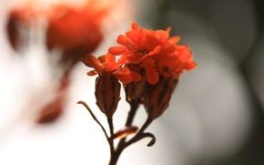 Picture macro, nature, petals, inflorescence
