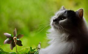 Picture white, cat, profile