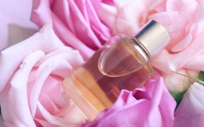 Picture perfume, petals, rose, pink, petals, pink roses, spa, oil, anoint