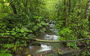 Picture trees, nature, river, stream, Forest