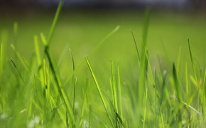 Picture greens, spring, grass