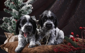 Picture holiday, tree, puppies, Spaniel, spotted