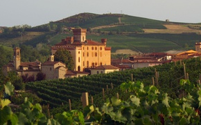 Picture Italy, wine, Piemonte, vineyard, red wine, Barolo, Denomination of Controlled and Guaranteed Origin, DOCG, vitis …