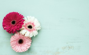 Picture flowers, background, colorful, pink, gerbera, wood, pink, flowers, spring, gerbera