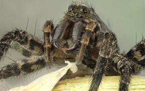 Picture macro, portrait, spider