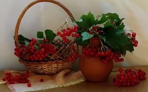 Picture autumn, berries, still life, Kalina