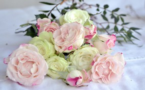Picture flowers, Roses, buds