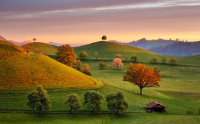 Picture trees, field, Switzerland, house, Fairytale Morning