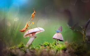 Picture grass, light, Rosa, butterfly, mushrooms, moss, mantis, bug, bokeh, macrocosm
