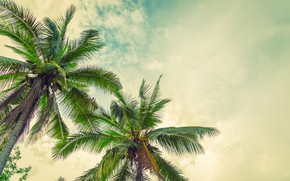 Picture beach, summer, the sun, palm trees, summer, beach, paradise, palms, tropical