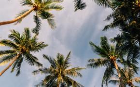 Picture beach, summer, the sky, palm trees, summer, beach, sky, paradise, palms, tropical, beautifu