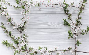 Picture flowers, branches, apple, spring, white, white, Apple, wood, blossom, flowers, romantic, spring, tender