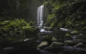 Picture forest, river, stones, rocks, waterfall, jungle