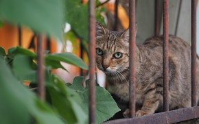 Picture cat, look, the fence, Kote