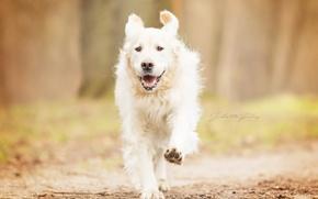Picture autumn, dog, running