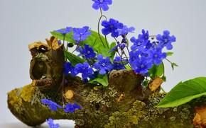 Picture flowers, stump, Violet