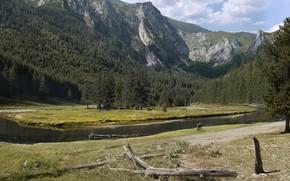 Picture mountains, river, animal, vegetation, MP4FILM mini challenge