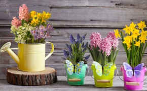Wallpaper spring, decor, Muscari, buckets, butterfly, hyacinth, hyacinths, lake, daffodils, bouquets, crocuses, yellow, flowers
