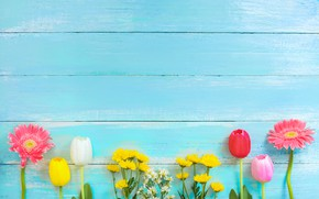 Picture flowers, spring, colorful, tulips, gerbera, chrysanthemum, wood, flowers, tulips, spring, gerbera, tender