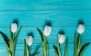 Picture flowers, tulips, white, white, fresh, wood, blue, flowers, beautiful, tulips, spring, tender