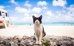 Picture sea, summer, cat, look