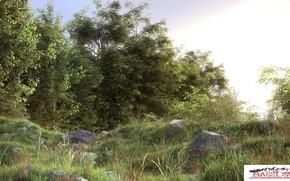 Picture summer, nature, stones, vegetation, nature