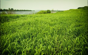 Picture summer, grass, nature, green, shore
