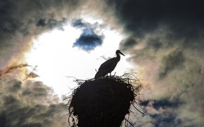 Picture the sky, night, socket, stork