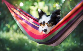 Picture face, dog, glasses, hammock, bokeh, The border collie